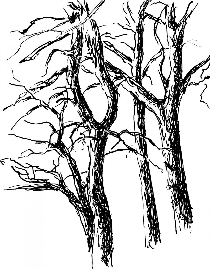 Zeichnen lernen: Bäume